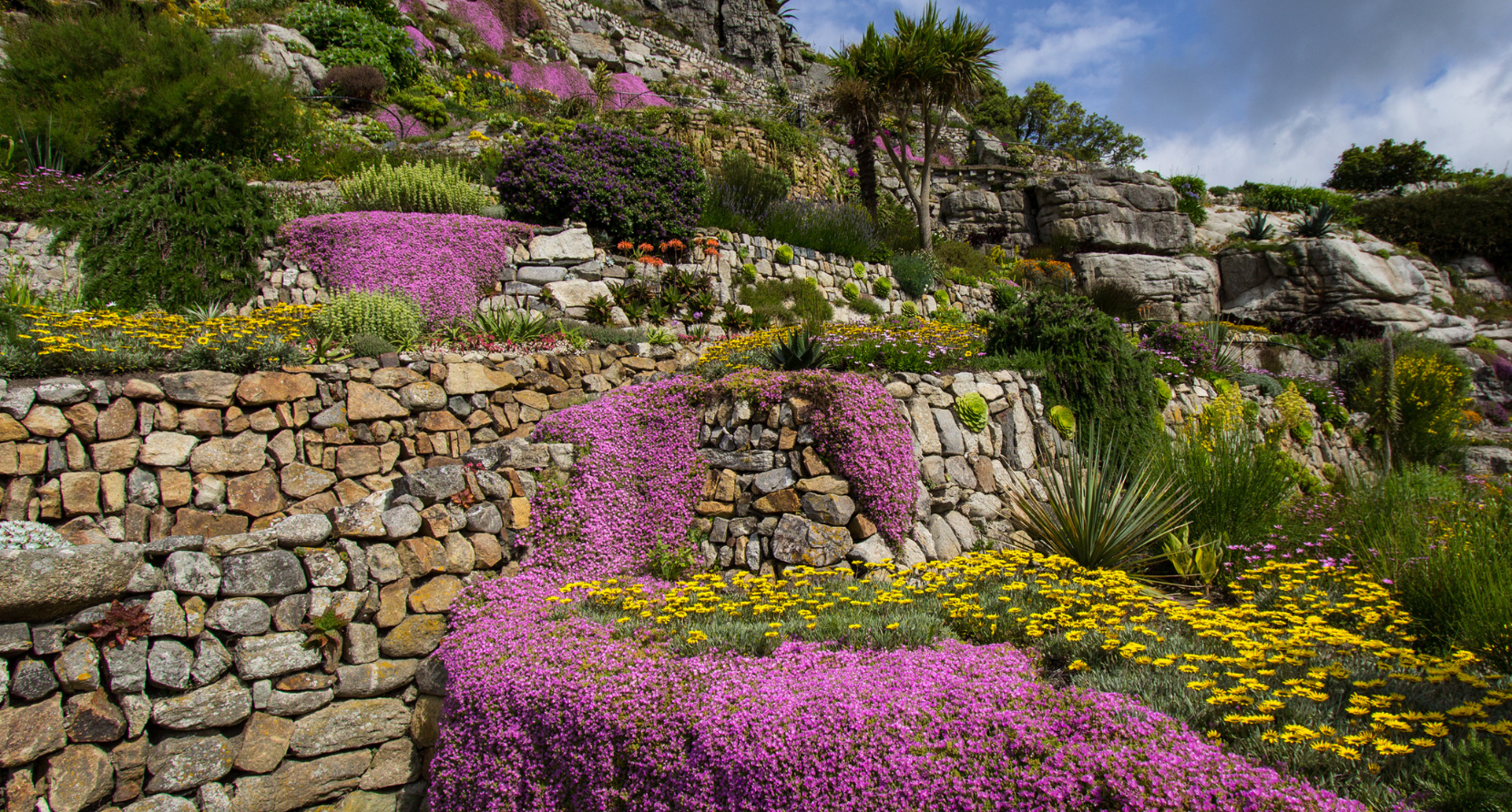 Trailing pinks in the garden on St Michael's Mount